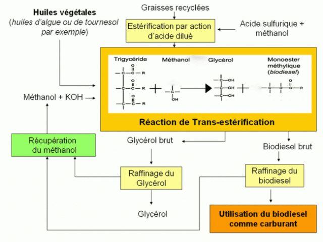 Fabriquer du diester ou biodiesel : la recette