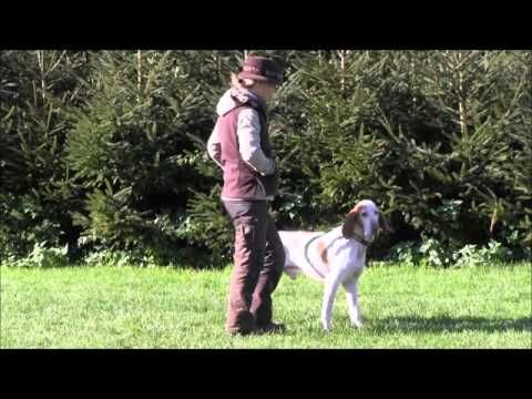 """Hundeschule Loewenzahn """"Leinenaggression - Souveräne Führung als Vermeidungsstrategie"""" - YouTube"""