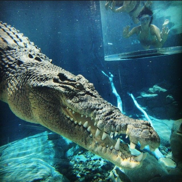// a u s t r a l i a //  Swim with crocs in the Northern Territory. Photo taken by ultimate.travel on Instagram