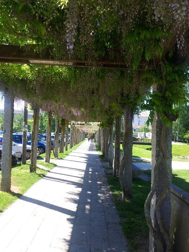 Parque de los Condes en #MonforteDeLemos #Galicia #Spain by acabritox via Twitter