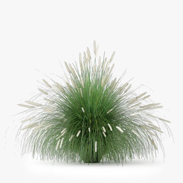 1000 ideas about capim on pinterest capim do texas for Vegetacion ornamental