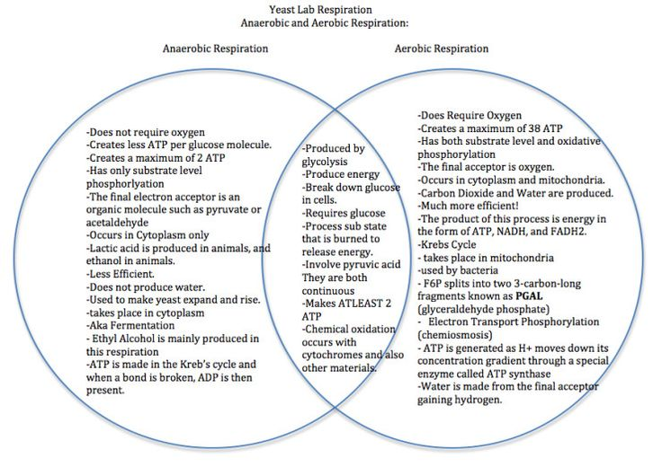 the venn diagram compares aerobic respiration and anaerobic respiration