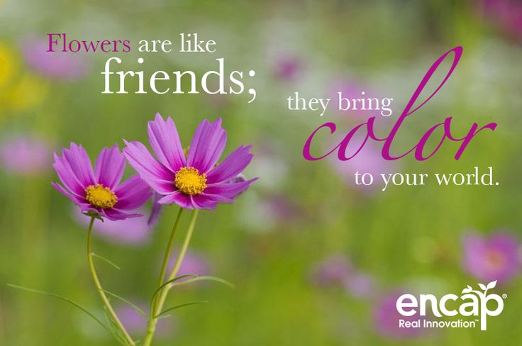 Flowers are like friends; they bring color to your world ...