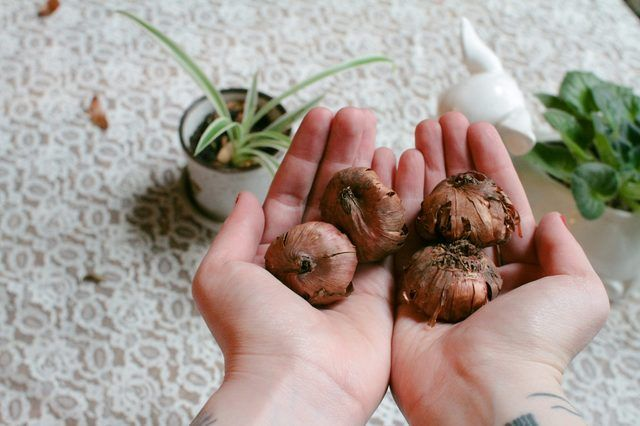 When to Plant Gladiolus Bulbs?                                                                                                                                                     More