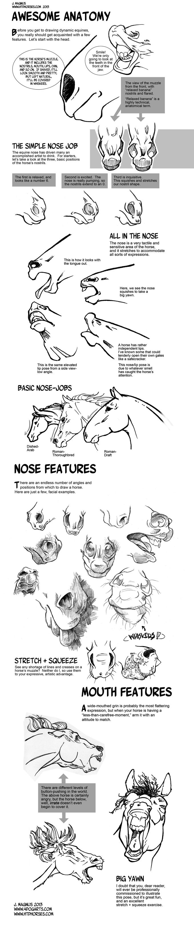 Horse Anatomy Part I by sketcherjak.deviantart.com on @deviantART
