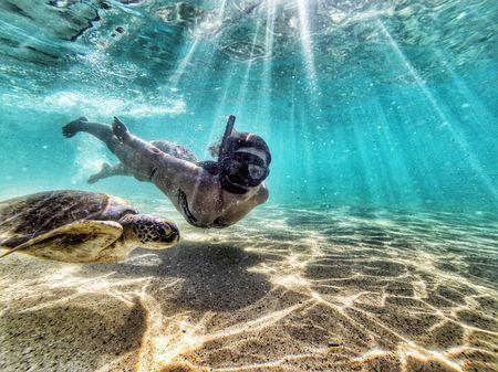 Turtle in Fernando de Noronha Photo by Max Fercondini — National Geographic Your Shot