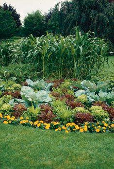 Planting A Vegetable Garden In Georgia   The Garden Inspirations