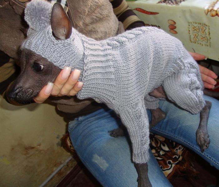 шапка и комб для собачки. Обсуждение на LiveInternet - Российский Сервис Онлайн-Дневников