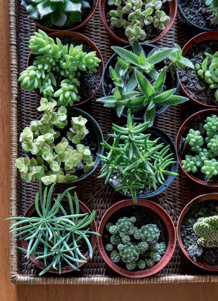 Meu apê é uma floresta: uma sala cheia de plantas - Casa