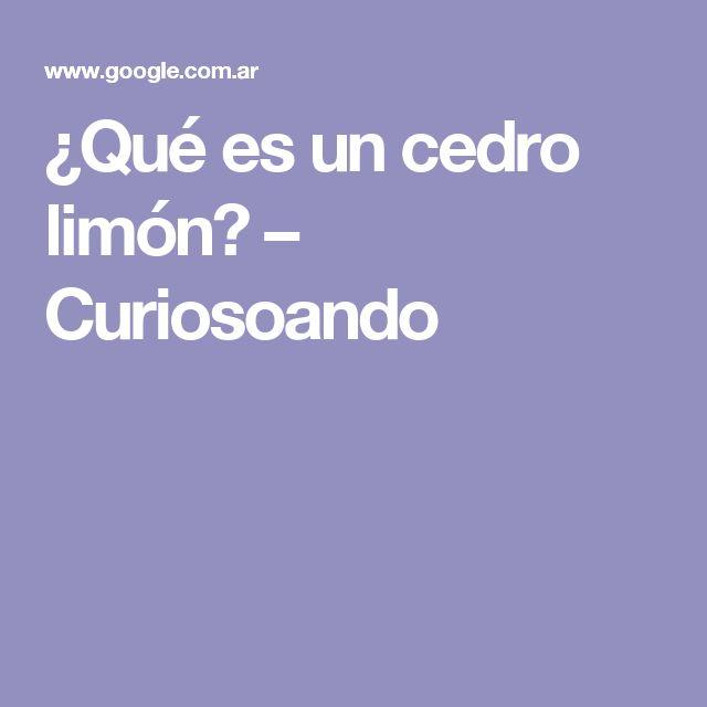 ¿Qué es un cedro limón? – Curiosoando
