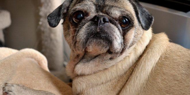 Best Food For Dogs Skin Allergies Meds For Dogs Best Dog