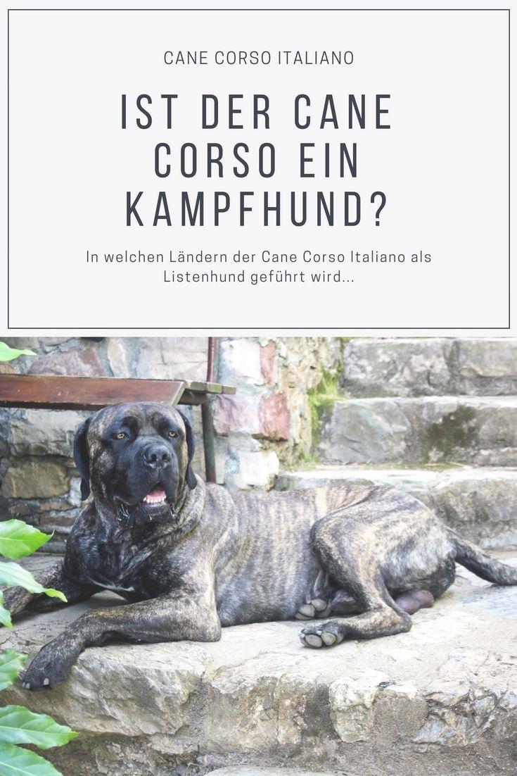 Cane Corso Italiano Wesen Charakter Erziehung Tiersinne Com Cane Corso Doggen Welpen Hunderassen