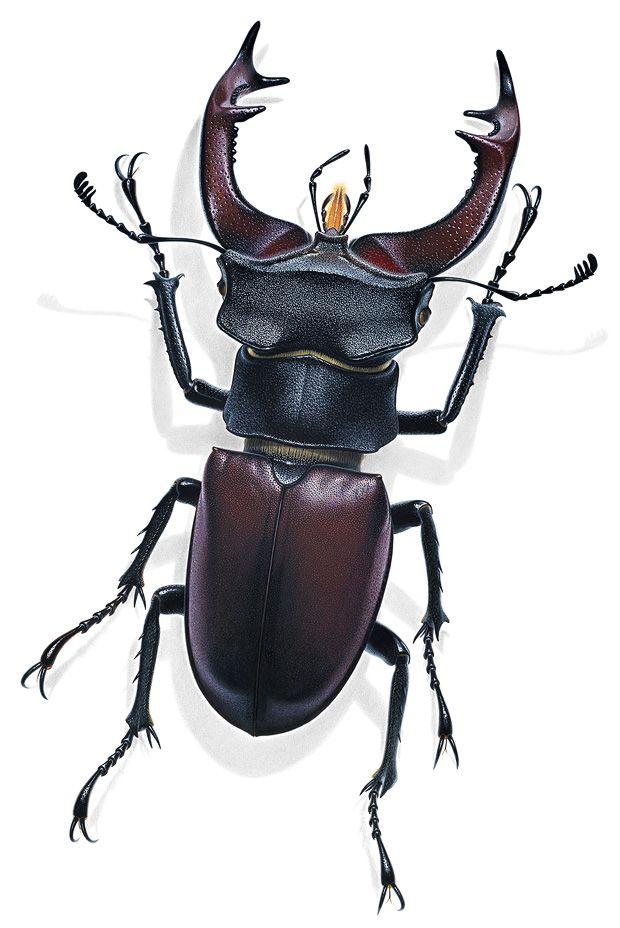 Insekten im Porträt: Krabbeln, Kribbeln, Colour-Blocking | Wissen | ZEIT ONLINE