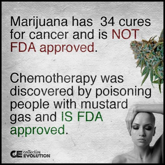 "HealthRanger on Twitter: ""Marijuana has 34 cures for cancer but the FDA won't…"