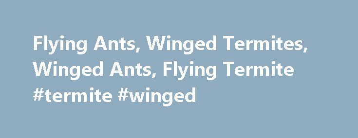 Flying Ants, Winged Termites, Winged Ants, Flying Termite #termite #winged http://las-vegas.nef2.com/flying-ants-winged-termites-winged-ants-flying-termite-termite-winged/  # Flying Ants The sight of flying ants in and around the home alarms most people. Contrary to popular belief, flying ants are not always a sign of termites or termite infestations in a home. Ants with Wings, Termites with Wings Termites do indeed spread their species by swarming (sending winged reproductives out of the…