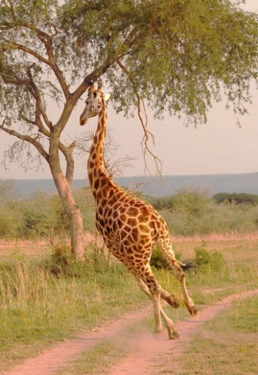 Masindi, Western Uganda  - Explore the World with Travel Nerd Nici, one Country at a Time. http://travelnerdnici.com