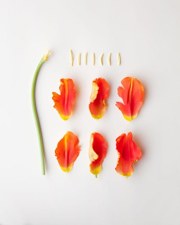 Broken Flowers on Behance