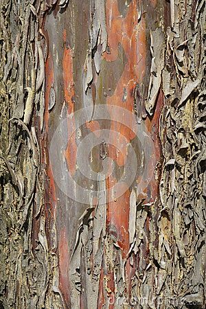 Wooden abstract texture with gray and brown barks on an old tree.