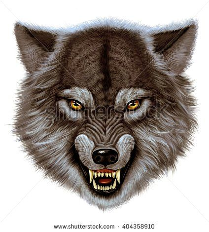Angry wolf head. White background - stock photo