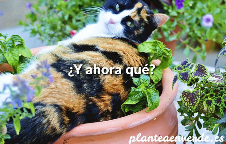 gatos en el huerto y el jardín
