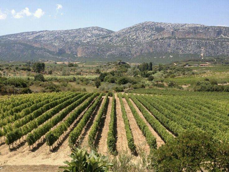 Cannonau wines-Sardinia