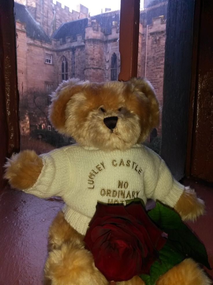 Lumley Bear has got his Mum a Mothers' Day rose.  Mum's coming to Lumley for lunch or afternoon tea on Sunday March 15 will receive a complimentary potted African violet plant to take away