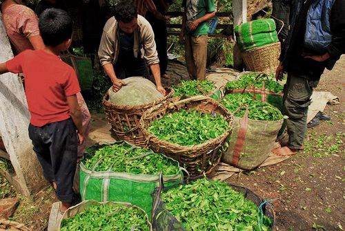 Mineral Spring is a certified organic village producing the best tea in Darjeeling. Learn all about tea production in this village through us www.tathagatafarm.com
