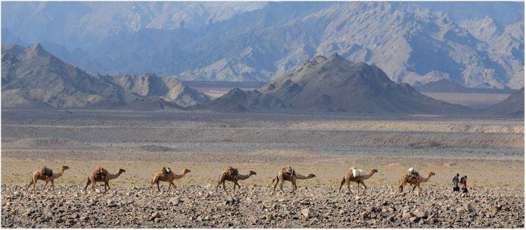Danakil Caravan - The Danakil Desert, Ethiopia | photo by edwardje
