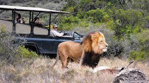 Safari depuis le Cap