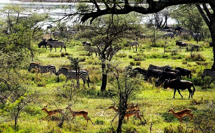 VENTURE HOLIDAYS_AFRICA_TANZANIA