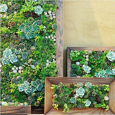 Dazzle Dad With 9 DIY Gifts For Fathers Day: Make him living succulent art for a vertical garden that he can hang indoors or outside. Source: Photos courtesy of Thomas J. Story for Sunset Magazine