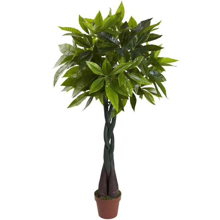 4′ Money Plant (Real Touch) – Products
