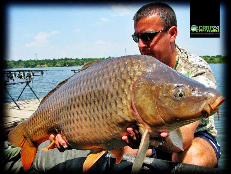 Crapii comuni au apreciat cel mai mult nada consistentă trimisă pe vad on Crap 24  http://www.crap24.ro/26-de-crapi-de-peste-10-kg-pescuiti-in-doar-24-de-ore/