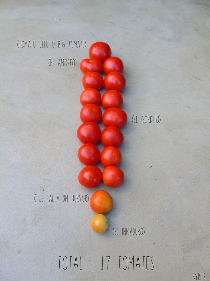 Cosecha Inesperada. 17 tomates