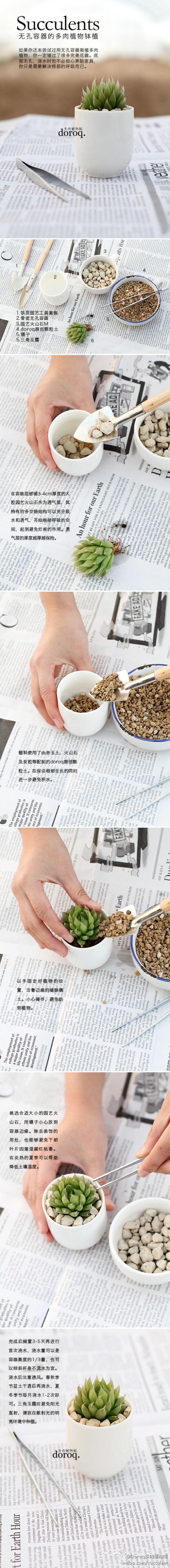 Succulent how to - in another language but its step by step pictures. 小小玉露