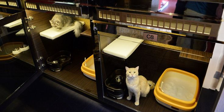 Luxury Hotel Just For Cats Offers Swarovski Studded Bowls And