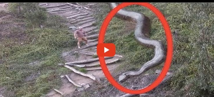 Biggest Snake Ever. The most dangerous snake in the world ...