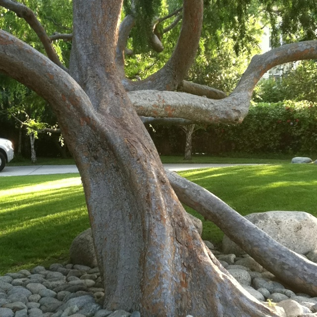 Most amazing tree ever