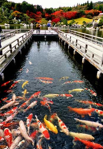 Sankei-en, Hiroshima.Looking for more information aboout Hiroshima? Go Visit…