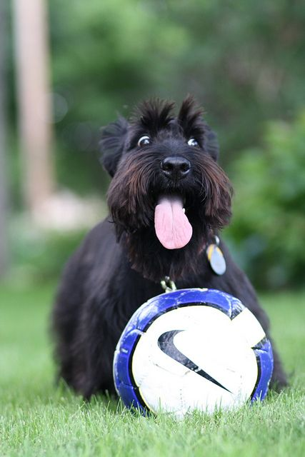"I have seen this look: it's the, ""I'm playin soccer & nobody's stoppin me"" look!"