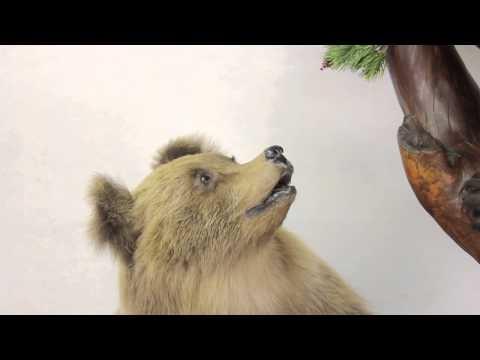 Таксидермия. Два медвежонка