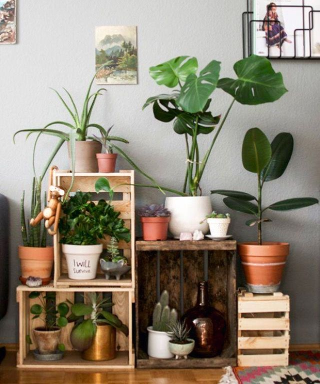 The plant in the brown pot on the right?