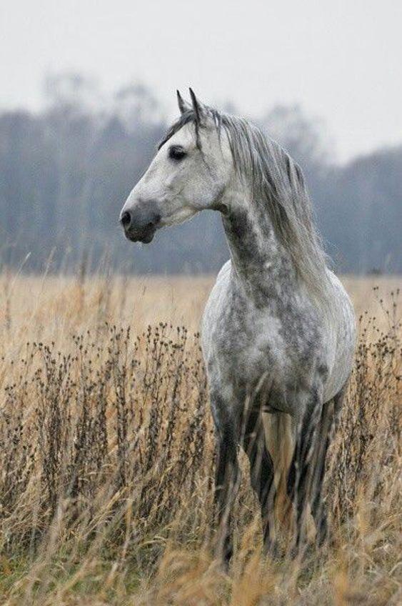 Es gibt so viele Pferderassen, dass es eines ganzen Buches bedarf, um das Thema zu verbergen. Pferde sind eine Rasse für jeden Zweck. Sie sind in allen …