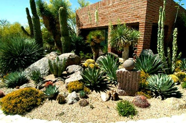 Beleza de cactos cactaceos cactus melhor blog cactos - Plantas de exterior resistentes al sol ...