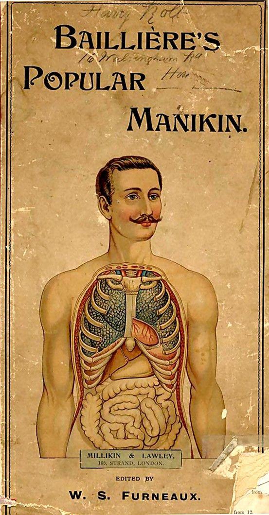 Dapper anatomy - Bailliere's popular manikin: Baillier Popular, Vintage Paper, Books Jackets, Popular Manikin, Vintage Man Illustrations, Vintage Anatomy, Man Gifts, Anatomy Models, Dapper Anatomy