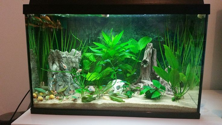 ... scaping Fish Tanks on Pinterest Aquascaping, Planted Aquarium and