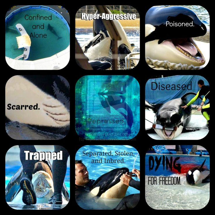 Captive Orcas are... by Thylacinus1.deviantart.com on @deviantART