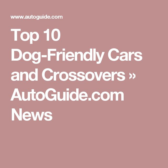 Top 10 Dog-Friendly Cars and Crossovers » AutoGuide.com News