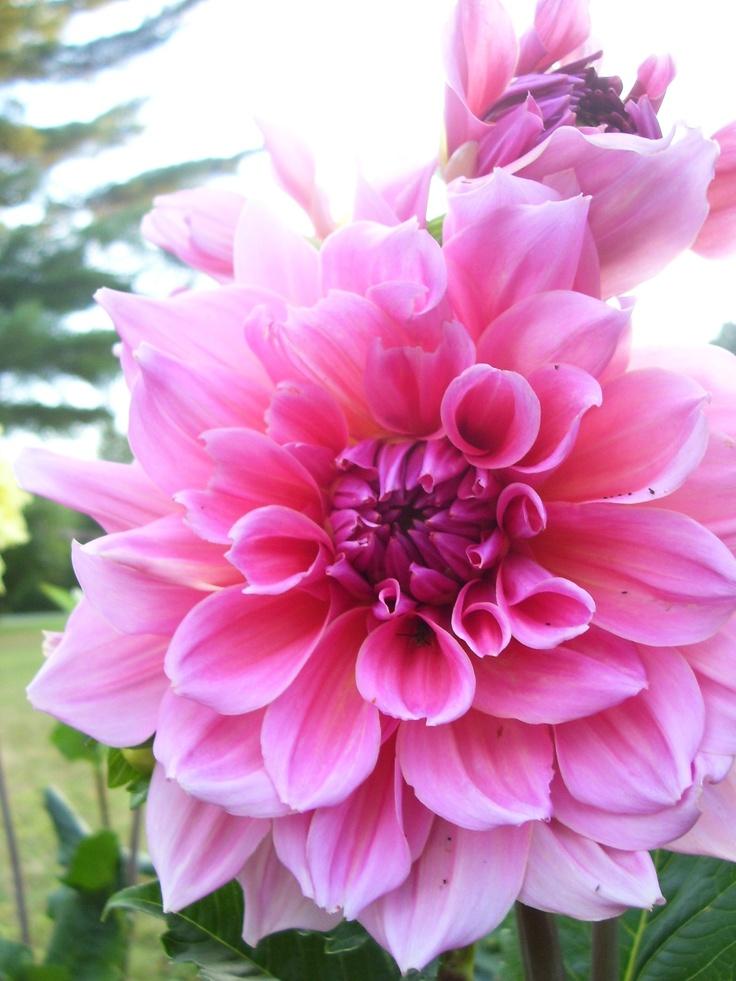 I love this flower.
