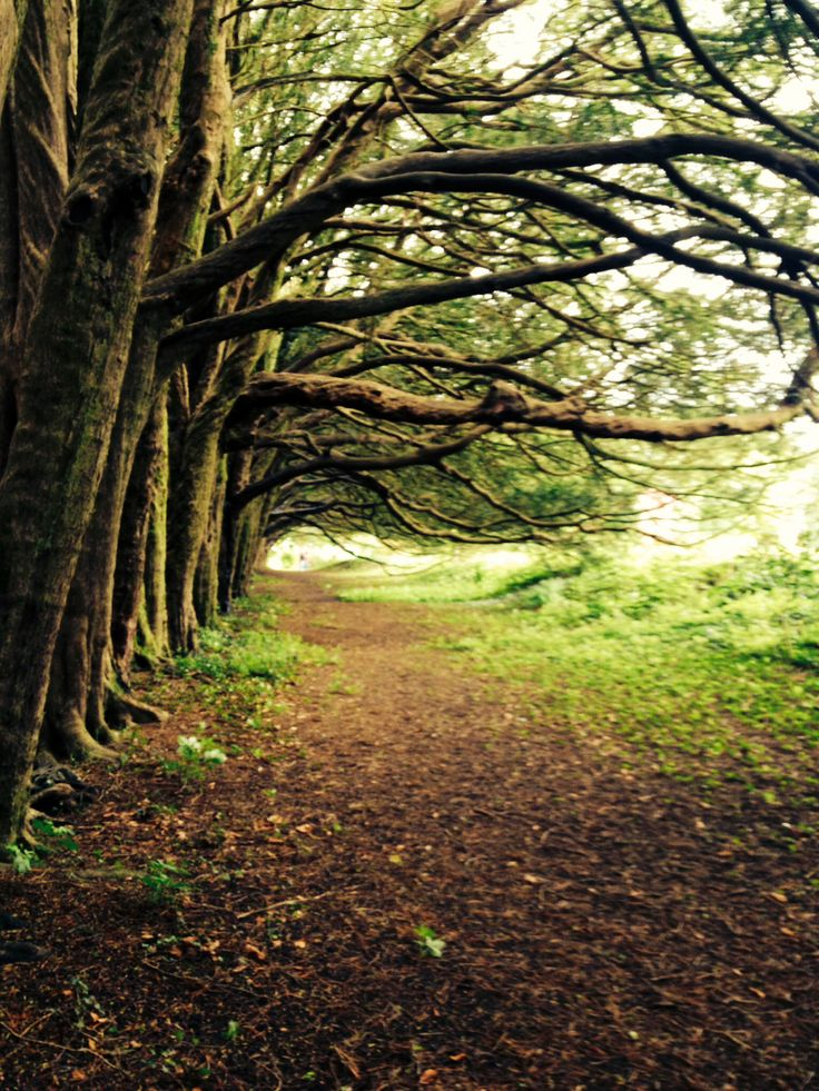 Yew Walk, Huntington Castle, Co.Carlow